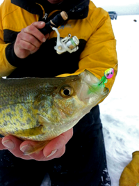 image of giant Crappie caught on a Lindy Foo Flyer