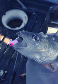 image of lindy live bait jig
