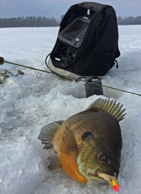 image of Bluegill on the ice