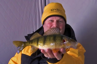 image links to video about perch fishing