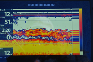 image of fish on screen of humminbird graph