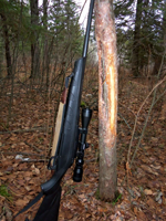 image of deer rifle