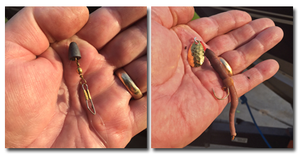 image of little joe spinner rigged for weed walleye