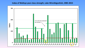 image of walleye year class chart