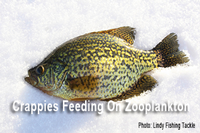 image links to crappie fishing article