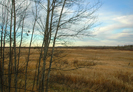 Deer Hunting View