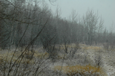 Deer River Deer Hunt