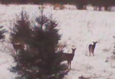 Deer Hunting Report 12-5-10