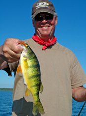 Perch Fishing Cass Lake