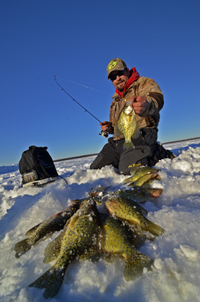 image of grand rapids fishing guide Zach Dagel with limit of Crappies on Bowstring Lake
