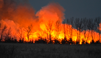 image of CRP habitat being burned