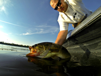 image of Bass Fishing Author Brett McComas relasing giant bass into the water