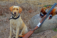 image of Sandy the Yellow Lab with 3 pheasants