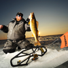 image of Pat Kalmerton holding big Walleye on ice
