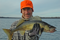image of Walleye caught during late fall