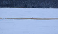 image of slush hole on Bowstring Lake