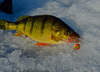 image of Lindy 360 Jig in Perch mouth