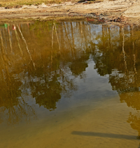image of low water conditions at Bowen Lodge