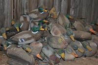image of Duck Decoys for sale