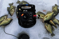 image of Crappies on ice at Bowstring Lake