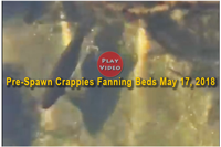 image links to video of crappie spawning