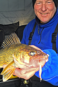 image of walleye caught on Lindy Quiver Spoon
