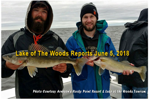 image of walleyes on lake of the woods