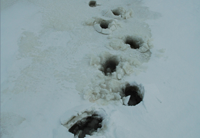 image of slushy foot prints