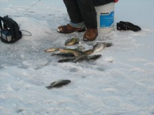 Crappies on Ice
