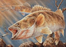 MN Walleye Stamp 2009