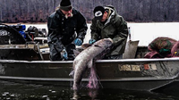 image links to article about asian carp